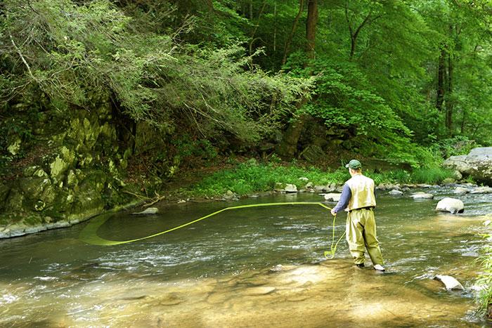 Southern appalachian strain brook trout stream near bryson for Best fishing in nc